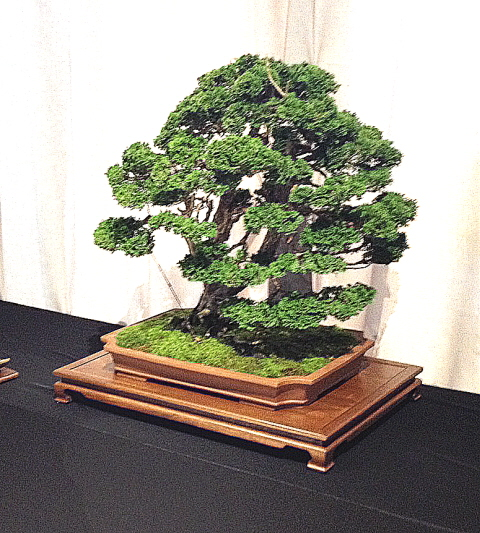 The bonsai tree is never finished.